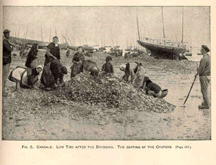 Oysters - Cancal, France (1889)