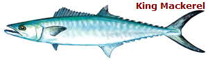 King Mackerel